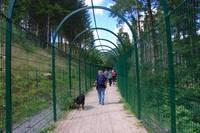 Beren zwarte woud
